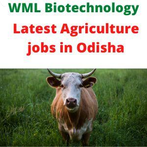 Agriculture jobs in Odisha