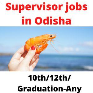 Supervisor jobs in Odisha